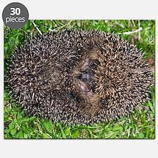 European hedgehog Puzzle