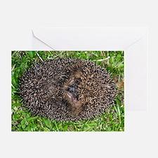 European hedgehog Greeting Card