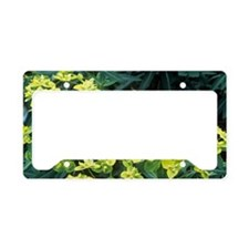 Euphorbia schillingii License Plate Holder