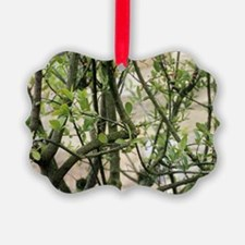 European spindletree Ornament