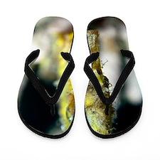Estuarine seahorse Flip Flops