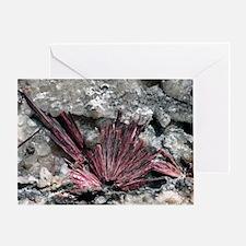 Erythrite crystals Greeting Card