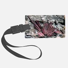 Erythrite crystals Luggage Tag