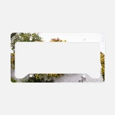 Escallonia exoniensis 'Gold B License Plate Holder