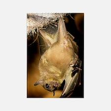 Egyptian rousette bat Rectangle Magnet