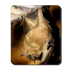 Egyptian rousette bat Mousepad