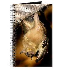 Egyptian rousette bat Journal