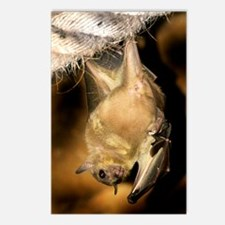 Egyptian rousette bat Postcards (Package of 8)