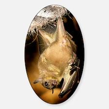 Egyptian rousette bat Decal