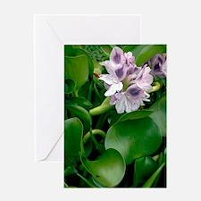Eichhornia crassipes Water Hyacinth Greeting Card