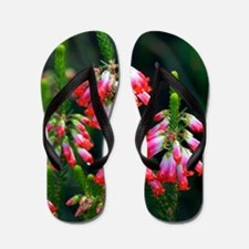 Elim heath (Erica regia) Flip Flops