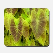 Elephant Ear (Colocasia esculenta) Mousepad