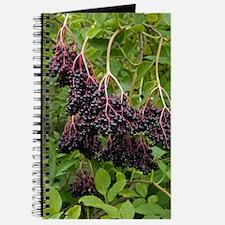 Elderberries (Sambucus nigra) Journal