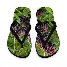 Elderberries (Sambucus nigra) Flip Flops