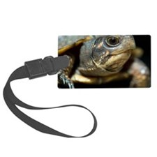 Eastern box turtle Luggage Tag