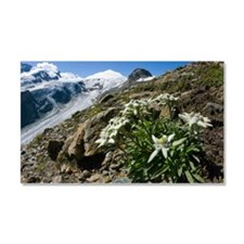 Edelweiss and glacier Car Magnet 20 x 12