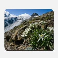 Edelweiss and glacier Mousepad