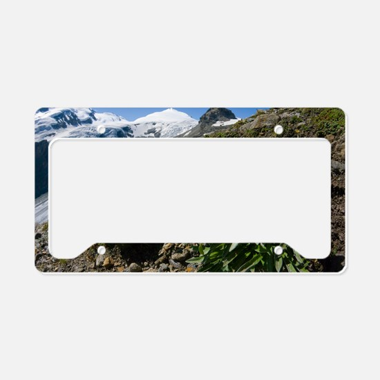 Edelweiss and glacier License Plate Holder