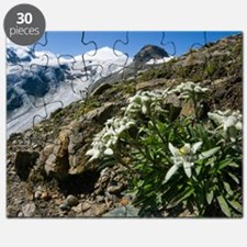 Edelweiss and glacier Puzzle