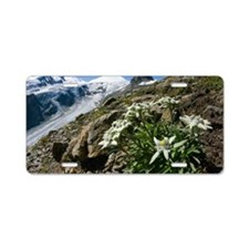 Edelweiss and glacier Aluminum License Plate