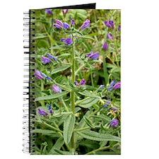 Echium plantagineum Journal
