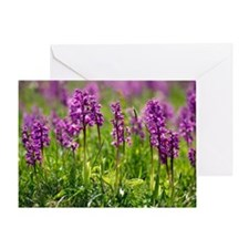 Early purple orchids (Orchis mascula Greeting Card