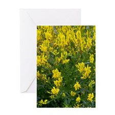 Dyer's greenweed (Genista tinctoria) Greeting Card