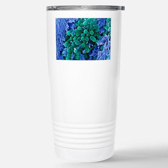 E. coli bacteria, SEM Stainless Steel Travel Mug