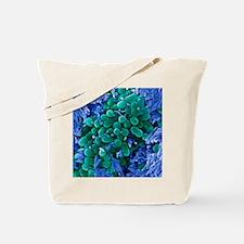 E. coli bacteria, SEM Tote Bag