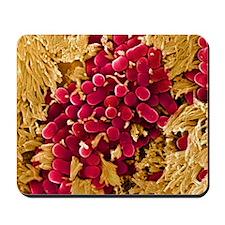 E coli bacteria, SEM Mousepad