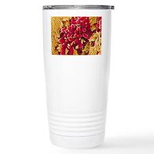 E coli bacteria, SEM Ceramic Travel Mug