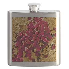 E coli bacteria, SEM Flask