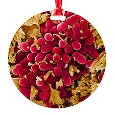 E coli bacteria, SEM Ornament