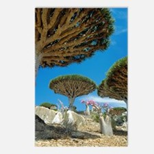 Dragon's blood trees Postcards (Package of 8)