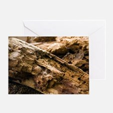 Dry rot fungus Greeting Card