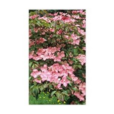 Dogwood (Cornus florida 'Sweet Decal