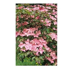 Dogwood (Cornus florida ' Postcards (Package of 8)