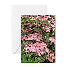 Dogwood (Cornus florida 'Sweetwater' Greeting Card
