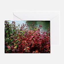 Dogwood (Cornus alba 'Sibirica') Greeting Card
