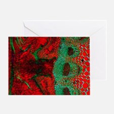 Dodder parasitic plant Greeting Card