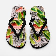Diatoms, SEM Flip Flops