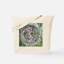Dicotyledon plant stem, SEM Tote Bag