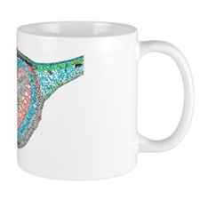 Dicotyledon leaf, light micrograph Mug
