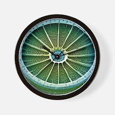 Diatom, SEM Wall Clock