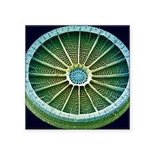 """Diatom, SEM Square Sticker 3"""" x 3"""""""