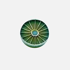 Diatom, SEM Mini Button