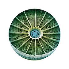 """Diatom, SEM 3.5"""" Button"""