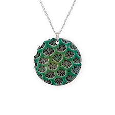 Diatom alga, SEM Necklace
