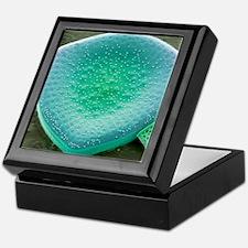 Diatom, SEM Keepsake Box