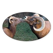 Desert Bighorn Sheep Decal